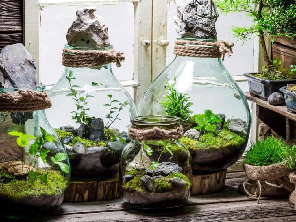 Terrarium At Home