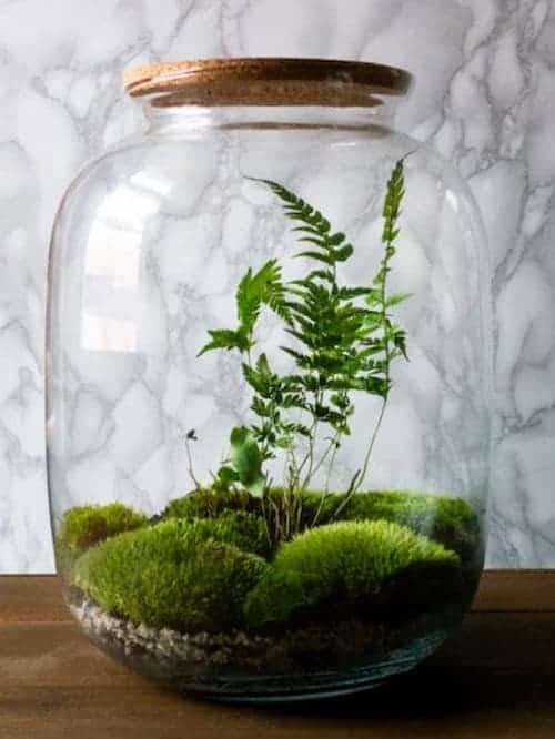 terrarium mold